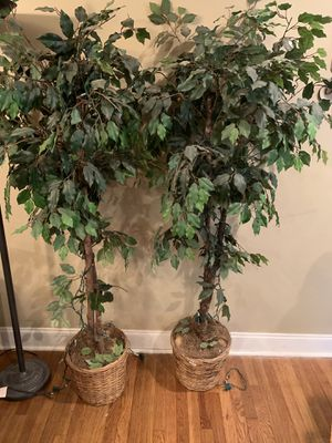 Tree plants for Sale in Decatur, GA