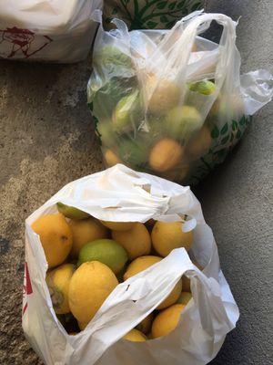 Bag of Lemons for Sale in Riverside, CA