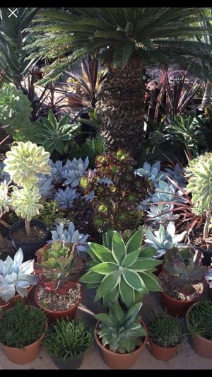 Succulents Plants Prices ranging from $1.00 to $55. for Sale in Menifee, CA