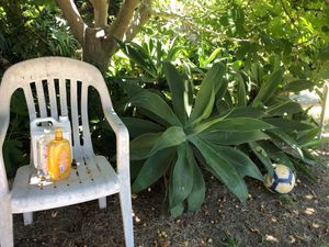Mature succulent landscaping plants $5-20 for Sale in Costa Mesa, CA