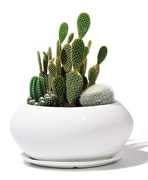 """Firm Price! Brand New in a Box 6.9"""" Ceramic Plant Flower Pot, Located in North Park for Pick Up or Shipping Only! for Sale in San Diego, CA"""