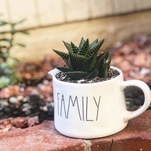 Succulent plant for Sale in Cypress, CA