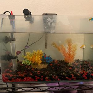 Fish Tank and Fishes for Sale in Montebello, CA