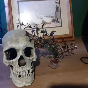 Skull / Fish Decor for Sale in Stockton, CA