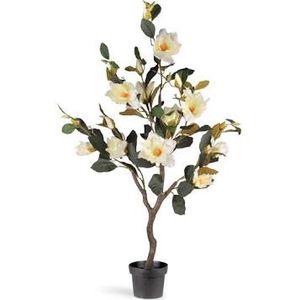 48 in Magnolia Tree for Sale in Dallas, TX