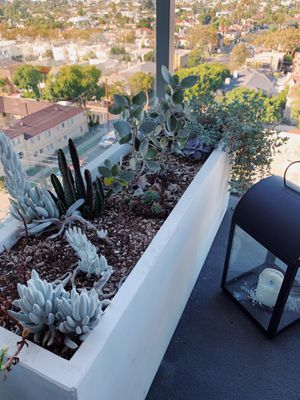 Cactus garden with beautiful planter for Sale in West Hollywood, CA