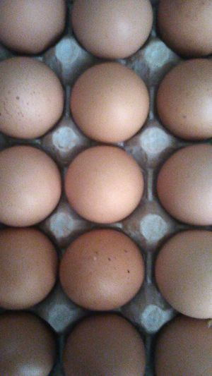Large Organic eggs for Sale in Riverside, CA
