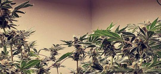 Spider Farmer Sf 4000 Grow Light For Plants for Sale in Oxnard,  CA