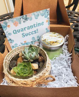 Quarantine Succs - Succulent Gift Box for Sale in Lunenburg, MA