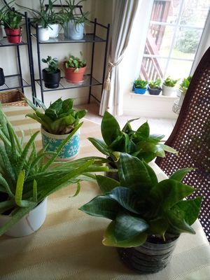 Indoor Plants for Sale in Woodbridge, VA