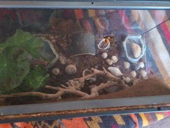 Small Terrarium for Sale in Austin,  TX
