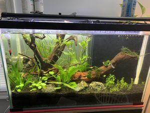 Aquarium plants, led light, co2 regulator, rocks, driftwood for Sale in Woodbridge, VA