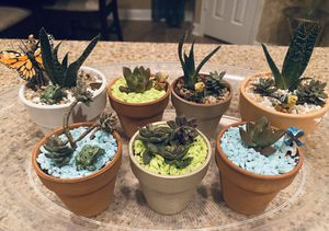 Mini succulent gardens for Sale in Pearland, TX