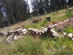 Eucalyptus Firewood for Sale in Santa Maria, CA