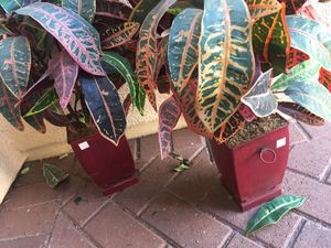 Artificial plants with pots for Sale in Irvine, CA