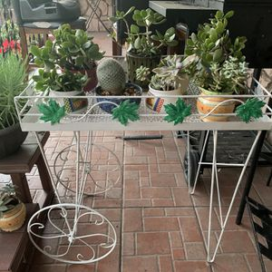 Small Plants From $10 Each for Sale in Los Angeles, CA