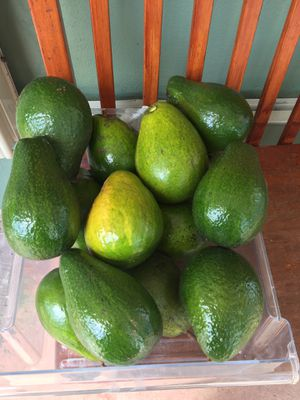 Avocados ready to eat for Sale in Homestead, FL