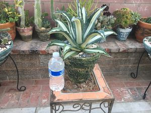 Rustic centerpiece with white stripes Maguey for Sale in Bloomington, CA