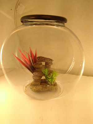 plastic round classic 5 gallon fish pet tank with rock decoration display piece for Sale in Belmont, MA