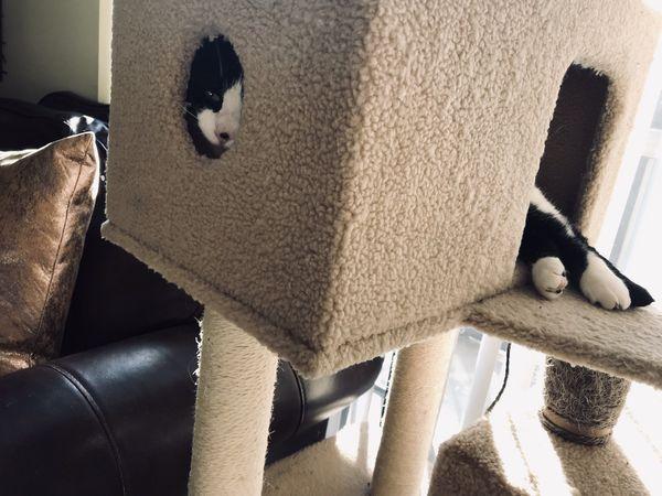 Cat's toys!!!