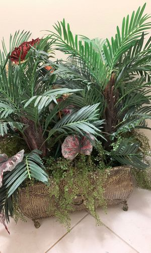 Plant 🌱 for Sale in Lauderdale Lakes, FL