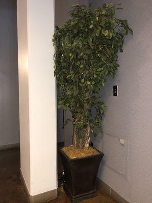 Tall Plant for Sale in Atlanta, GA