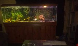 150 gallon aquarium with 400.00 pump, lid, stand, light, heaters, decor, accessories, storage, never had a leak. In great condition for Sale in Brooklyn, OH