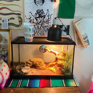 Leapord Gecko Terrarium & Reptile for Sale in San Francisco, CA