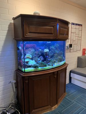 Bow Front Saltwater Fish Tank for Sale in Orange, CA
