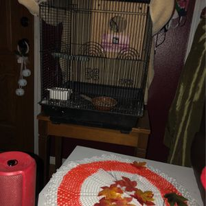Two Birds For Sale With Cage for Sale in Newcastle, WA