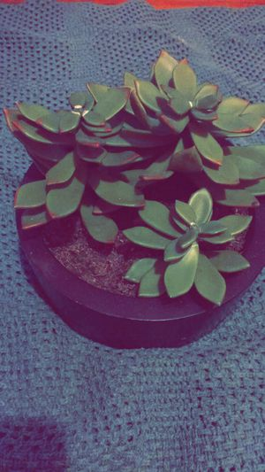 House plant fake for Sale in Cleveland, OH