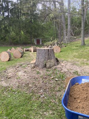 Free white Oak .... you cut and haul !! for Sale in Plum, PA