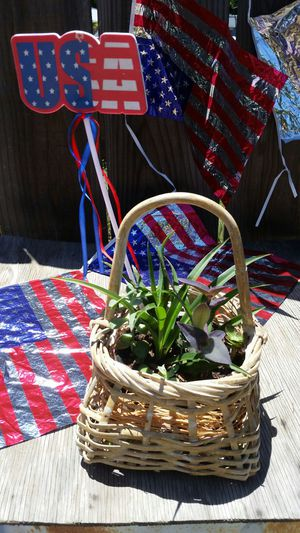 4th of July Plant Arrangement for Sale in Fresno, CA