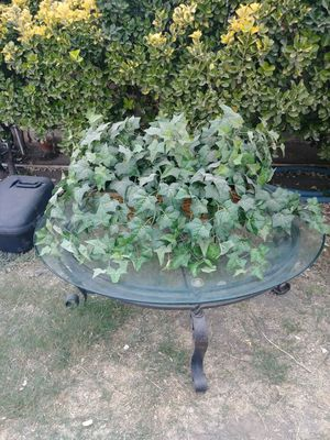 Plant for Sale in Moreno Valley, CA