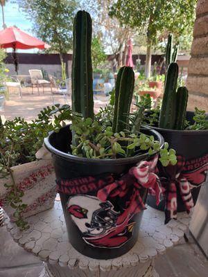 Plant , cacti, succulent, garden for Sale in Phoenix, AZ