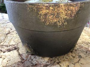 Decorative planter/pot for Sale in North Potomac, MD