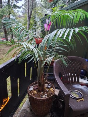 Plant, 4 1/2feet tall.(fake) for Sale in Gresham, OR