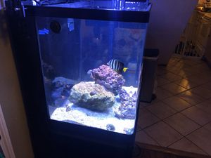 Red Sea Max 34 for Sale in Norfolk, VA