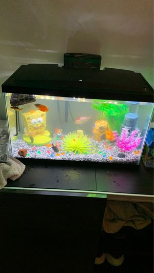 10 gallon fish tank for sale for Sale in Gahanna, OH