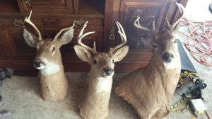 Deer mounts for Sale in Westerville, OH