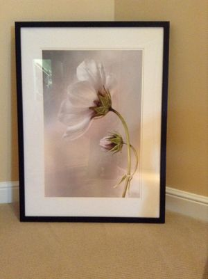 """New - Brand new. """" Cosmos"""" by Mandy Dgisher photographic print 22"""" by 29"""" Paid $128 for Sale in Boca Raton, FL"""