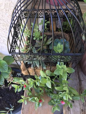 Succulent arrangements for Sale in Fresno, CA