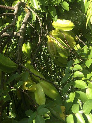 Fresh Starfruit for Sale in Orlando, FL