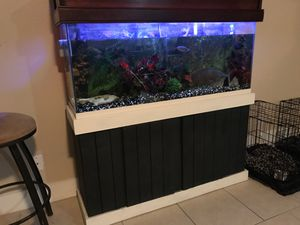 Custom built aquarium with a foot and a half tiger Oscar and plenty more fish for Sale in Nashville, TN