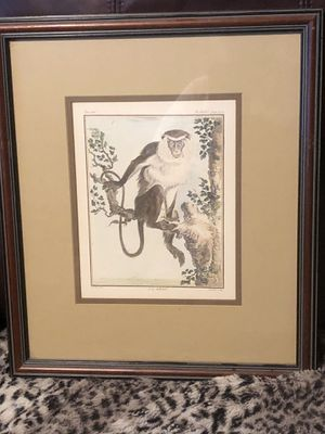 Monkey pictures for Sale in Land O Lakes, FL