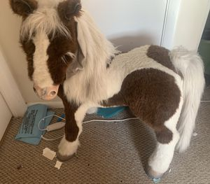 Furreal friends s'mores electronic pony for Sale in Virginia Beach, VA