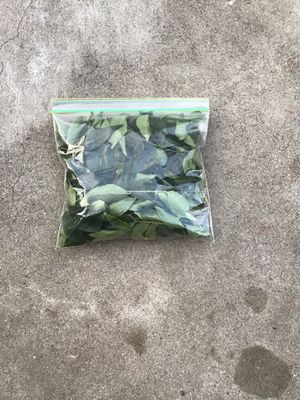 Organic curry leaves for Sale in Cypress, CA