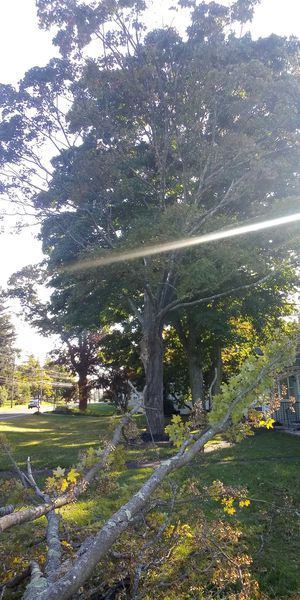 Tree removal an fall cleanup for Sale in East Haven, CT