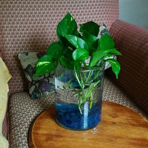 Plant natural. Attractives Leaves.End Vase the glass.tubo Available Big for Sale in Hartford, CT