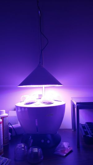 MGI H601-C - Plug and play all in one hydroponic system for Sale in Worcester, MA